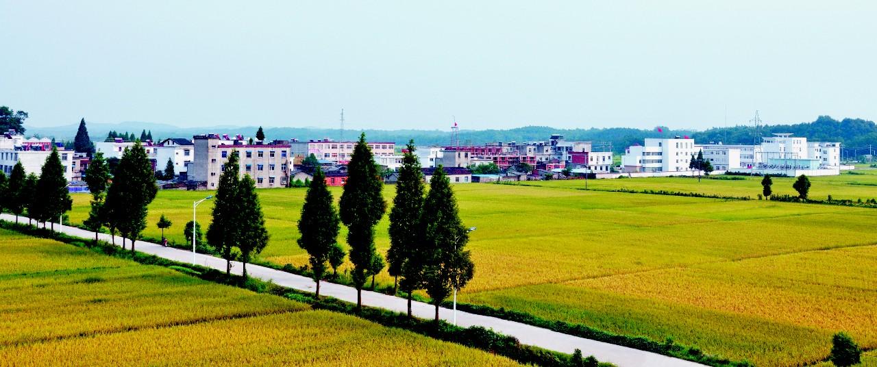 现代农业示范区---城西乡(李登求  摄).jpg