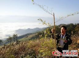 桐山造林示范片