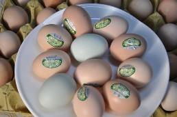 景湖土鸡蛋