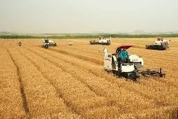 高标准农田小麦收割