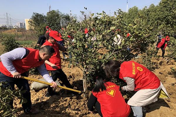 桃花镇组织年轻干部义务植树1.jpg