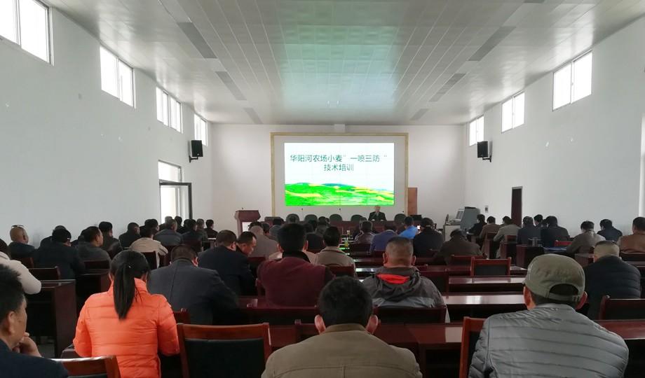 华阳河农场小麦一喷三防培训图片.jpg