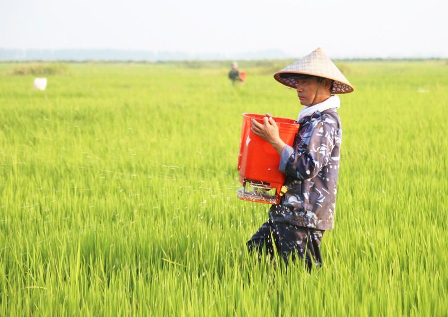 职工用半自动施肥机为拔节抽穗期的水稻施肥.JPG