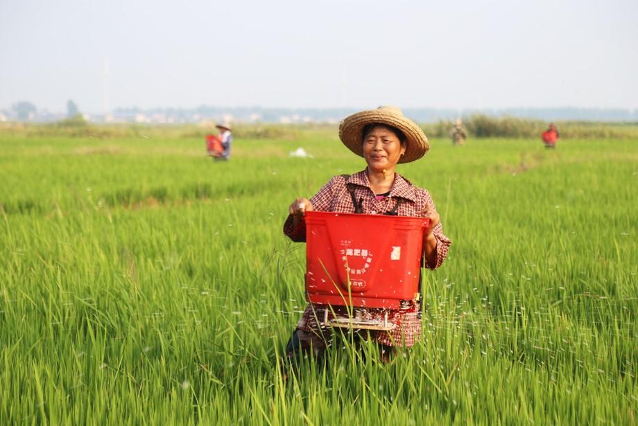 职工用半自动施肥机为拔节抽穗期的水稻施肥3.JPG