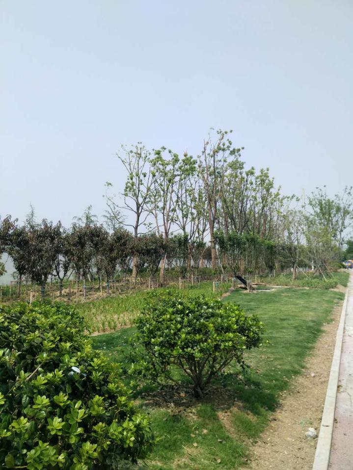 三清路绿化工程